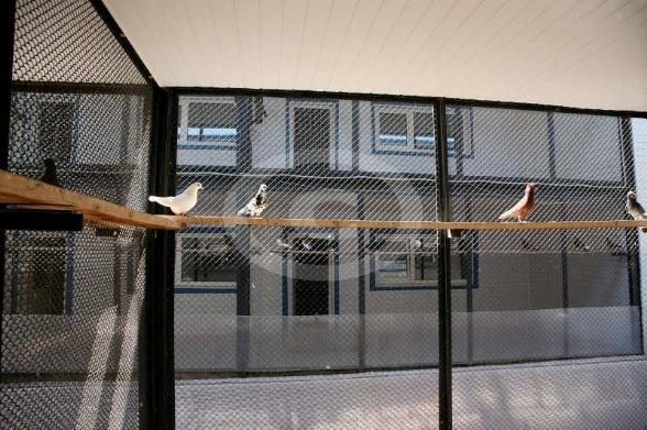 Фото: Вольера голубей в больнице птиц