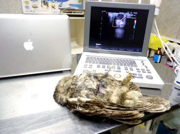 Фото: Оборудование клиники Зеленый Попугай. Аппарат УЗИ