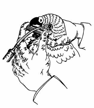 Фото: Кормление птицы при диареи