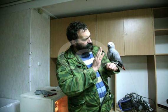 """Фото: Тот же самый попугай жако из вольеры (абсолютно дикий все время """"рычит"""") после 1 часа приручения. Сидит на руке, проводится работа по сокращению расстояния между рукой оператора и птицей. Жако пока еще реагирует небольшим рычанием когда расстояние по ее мнению слишком маленькое"""